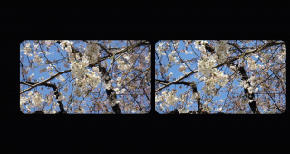 桜(平行法)機材は富士フ